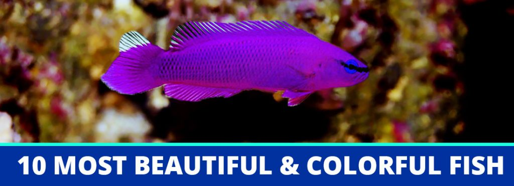 beautiful colorful fish header