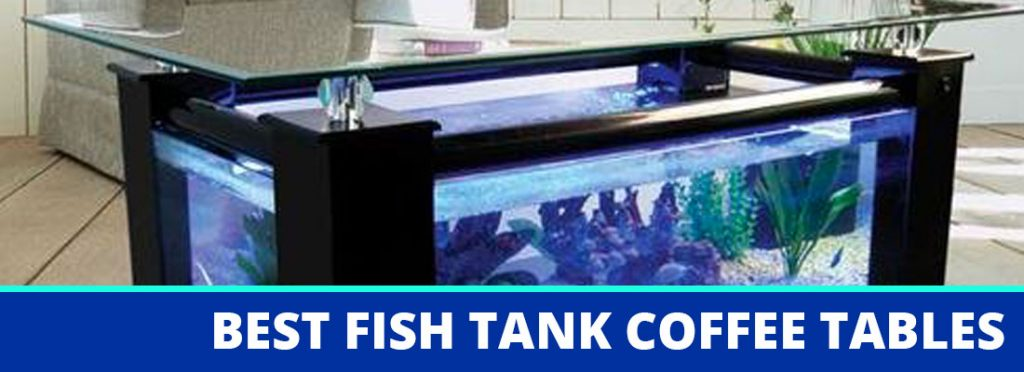 best fish tank coffee table header