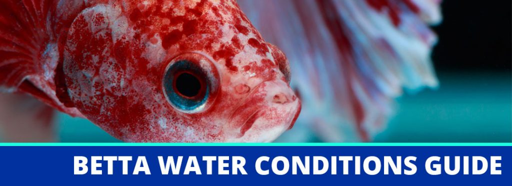 betta water conditions header
