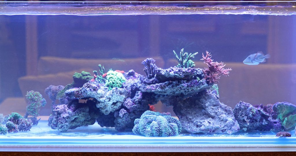 clean fish tank with blue hue