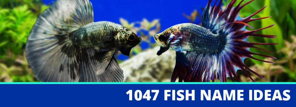 fish name header