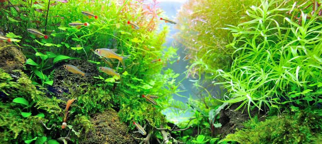 planted aquarium with the best lighting system
