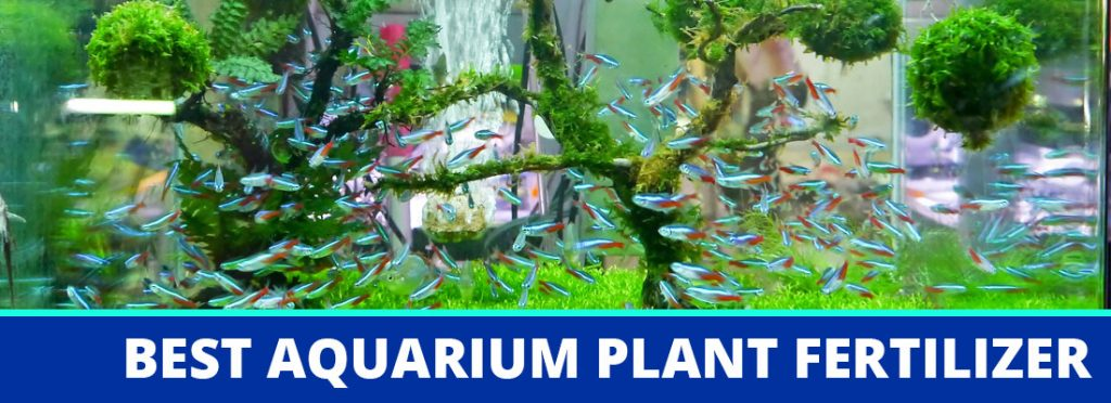 best aquarium plant fertilizer header