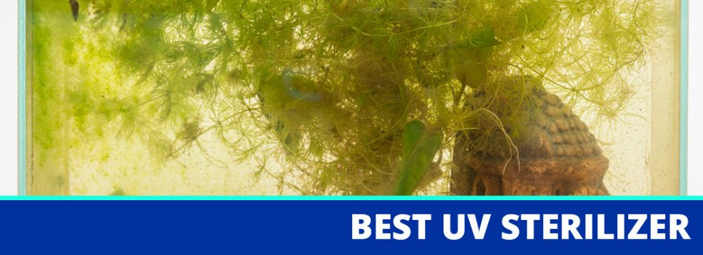 best uv sterilizer for aquariums header