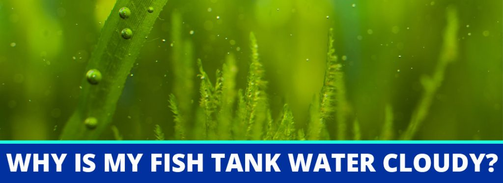 why is my fish tank water cloudy header