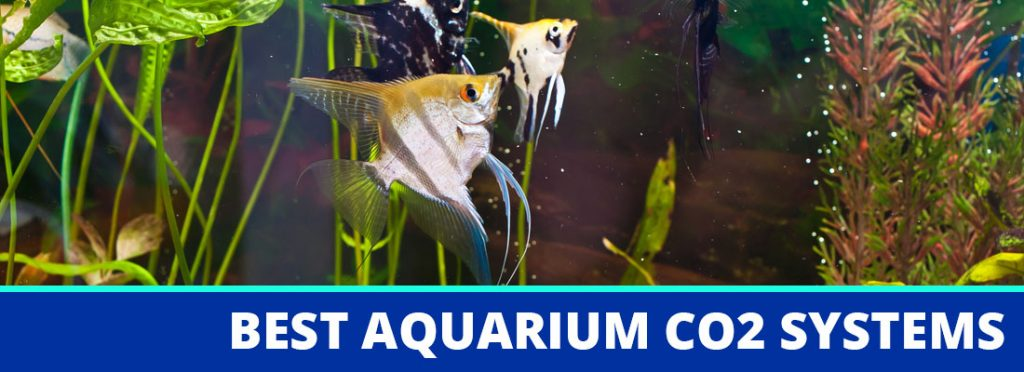 best aquarium co2 systems header