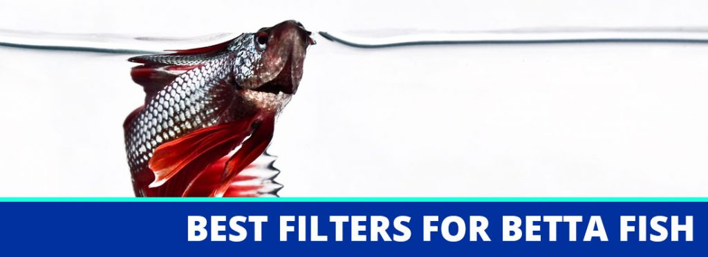 best filter for betta fish header