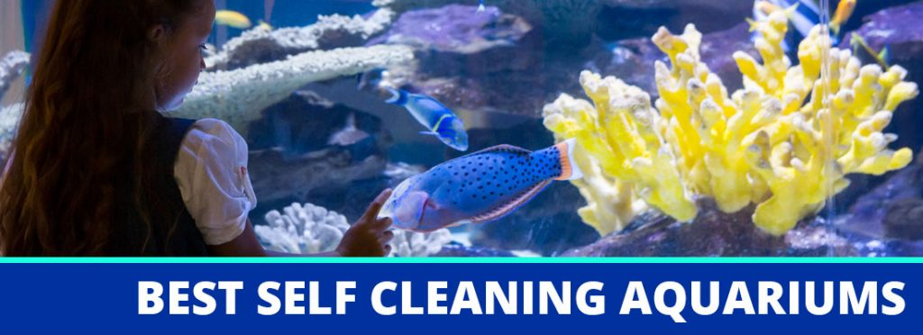 best self cleaning aquarium header