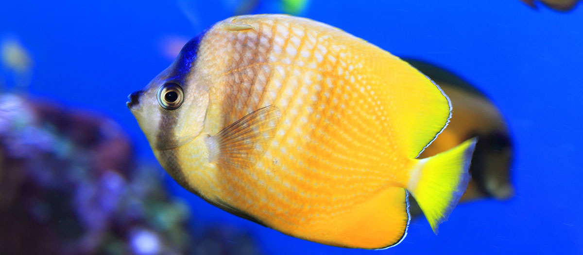 A List Of The 17 Best Saltwater Fish For Beginners