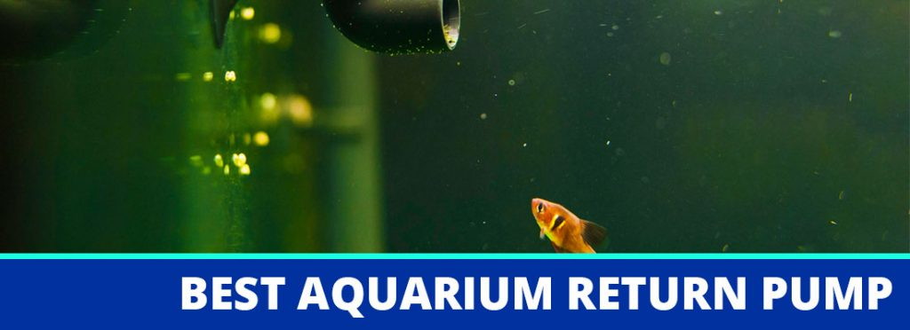 best aquarium return pump header