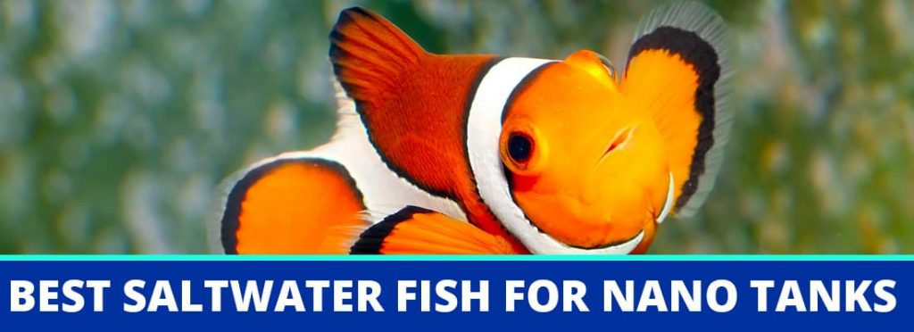 best saltwater fish for nano tanks header