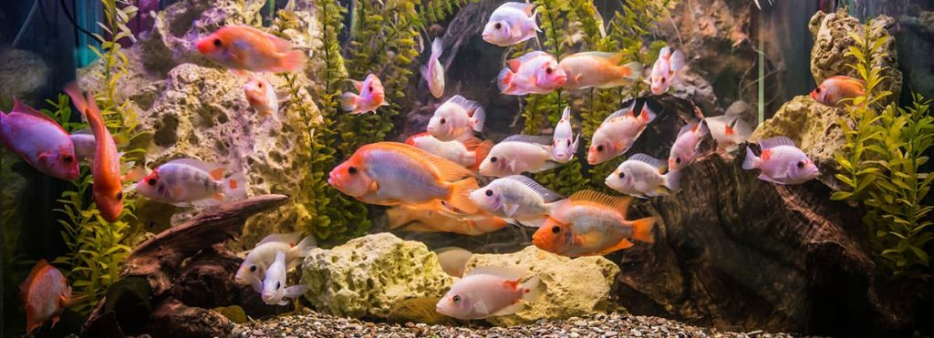 freshwater aquarium with plenty of fish